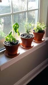 window herb harden indoor windowsill garden steps to successfully grow a windowsill