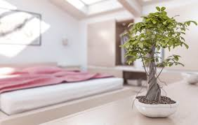 Best Plant For Bathroom by Feng Shui Where To Place Plants House Garden Ikea Gardenia