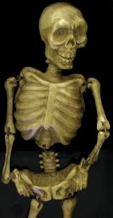 Dancing Halloween Skeleton by Skeleton Animal Picture More Detailed Picture About Free
