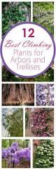 outdoor plant ideas avivancos com