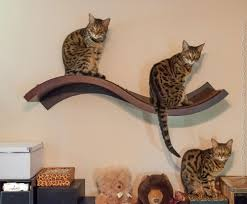Wall Mounted Cat Perch Catify Your Home With The Sophisticated Wave Perch From Urban Pet