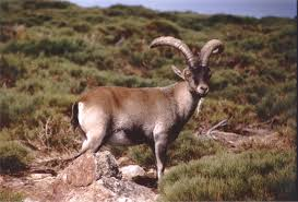 bringing animals extinction controversy