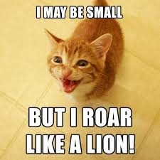 Success Cat Meme - 25 best cats cole and marmalade images on pinterest marmalade