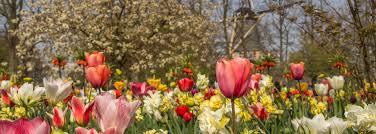 Blumen Bade Reisetipp Holland Im Keukenhof In Tulpen Baden
