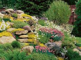 exciting rock garden ideas modest 6 best yard landscaping with