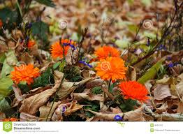 autumn flowers and withered leaves stock image image 4814241