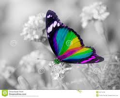 rainbow butterfly colorful wings stock photos image 30774133