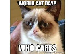 Who Cares Meme - world cat day who cares meme