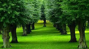 gorgeous trees wallpaper 1920x1080 30445