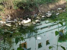 Water Borne Diseases In Plants 23 Incredible Facts About Water In Africa Statistics And More