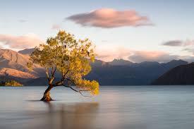 new zealand wanaka otago tree lake mountain birds clouds hd wallpaper
