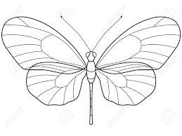the transparent outlinear skeleton of the butterfly for various