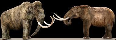 clovis hunting african elephant twilightbeasts