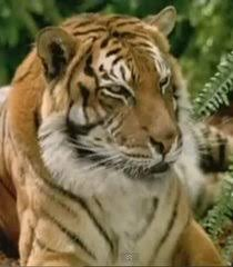 voice of tiger george of the jungle 2 the voice actors