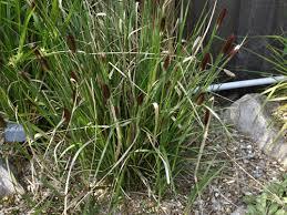 grasses liz mike s garden