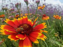 native plants for bees save the bees bath garden center