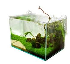 Best Substrate For Aquascaping Aquarium Substrates Explained The Green Machine