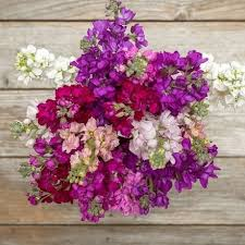 mothers day flowers s day flowers s day delivery the bouqs co