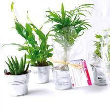 offrir plante dépolluante de bureau en pot zinc objet pub nature