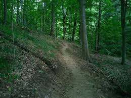 Indiana forest images 10 amazing state forests in indiana jpg