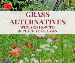 grass alternatives why and how to replace your lawn