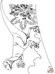 deinonychus dinosaur coloring page for coloring page creativemove me