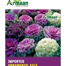 micro mini gerbera seeds arman seeds the leading company of