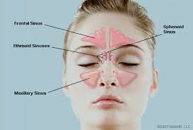 can sinus infection cause dizziness light headed what are the sinuses pictures of nasal cavities