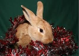 rabbit ramblings bunny greeting cards