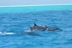 tour operator fined for harassing hawaiian spinner dolphins