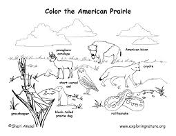 animal habitat coloring pages google 1st grade art