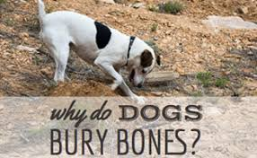 Can You Bury A Dog In Your Backyard Why Do Dogs Bury Bones And How To Get Them To Stop