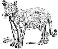 mountain lion clipart mountain lion clipart interesting