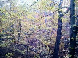 northern virginia woods android central