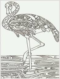 free coloring page bird