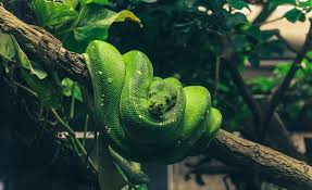 free photo beauty snake green terrarium reptile python max pixel