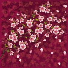 cherry blossom flowers cherry blossom wallpapers collections of hdq up to 4k wallpapers