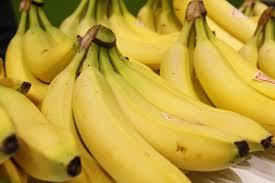Tiny Banana Why Are Bananas Curved Why Bananas Are Bent