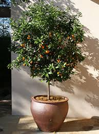 citrus gardening solutions of florida institute of