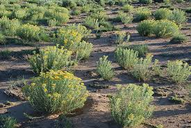 New Mexico vegetaion images Vegetation near grants new mexico art flickr jpg