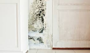 How To Prevent Black Mold In Bathroom How To Get Rid Of Black Mould And Damp In Your House Using This