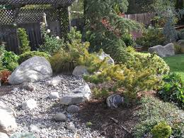 go wild with conifers at the san francisco flower and garden show