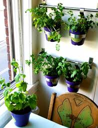 indoor kitchen garden ideas 21 kitchen herb garden ideas fit for every space tastymatters