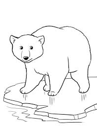 printable pictures of polar bears kids coloring