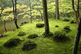 japanese garden japanese garden wikipedia