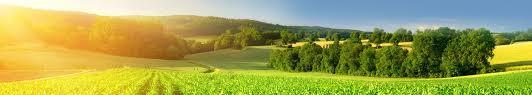 zahlungsansprüche landwirtschaft die steuerliche seite der zahlungsansprüche parta buchstelle für
