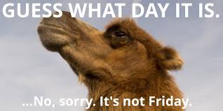 Hump Day Camel Meme - nutrino on twitter is the humpday meme old yet probably but