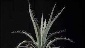 native texas plants for shade plant ideas sun u0026 shade michelle pfluger central texas gardener
