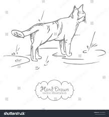 hand drawn illustration sketch cat rain stock vector 313108244