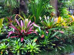 sub tropical garden design ideas u2013 izvipi com